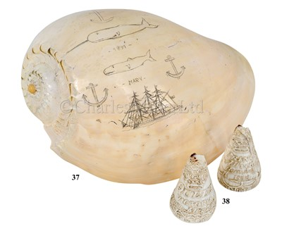 Lot 37-A SCRIMSHAW DECORATED POLISHED HELMET SHELL